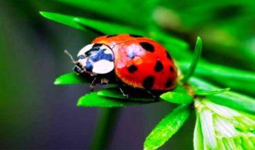 Entomoloji