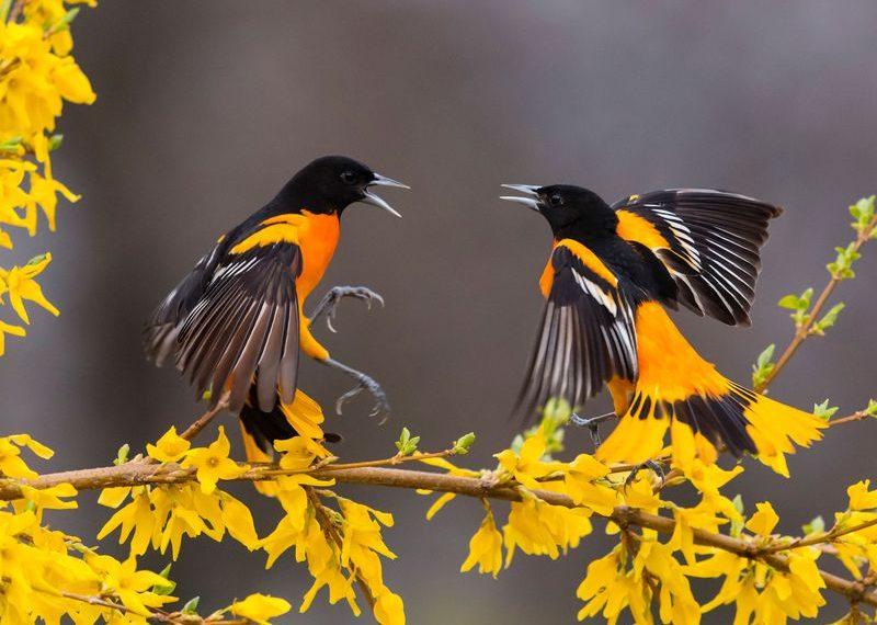 Ornitoloji
