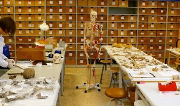 Kemikbilim (Osteoloji)