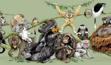 Primatoloji